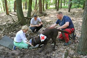 Das Ausbildungs- und Trainingsprogramm mit einem Rettungshund ist mit 2-3 Jahren äußerst zeit- und trainingsintensiv.