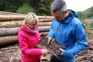 Der Borkenkäfer ist ein gefürchteter Forstschädling. Trockenheit und Stürme setzen vor allen den Fichten im Spessart immer wieder zu.