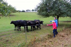 Das Wasserbüffel-Projekt des Naturparks Spessart läuft seit einigen Jahre sehr erfolgreich.