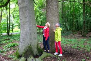Martina Fehlner und Bettina Göller bestaunen ein seltenes Baum-Zwillingspaar aus Buche und Eiche